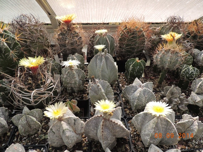 Cacti and Sukkulent in Köln, every day new flowers in the greenhouse Part 106 Bild1404