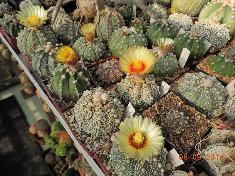 Cacti and Sukkulent in Köln, every day new flowers in the greenhouse Part 106 Bild1409