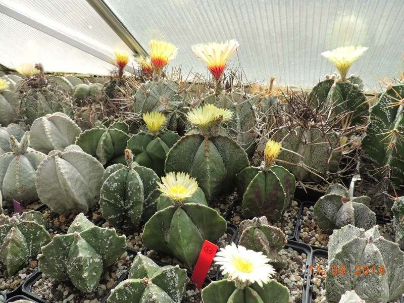Cacti and Sukkulent in Köln, every day new flowers in the greenhouse Part 107 Bild1439