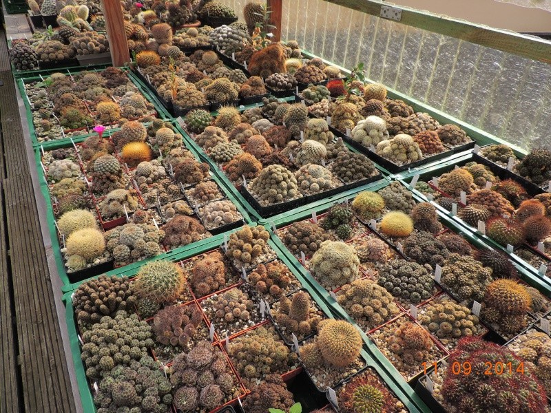 Cacti and Sukkulent in Köln, every day new flowers in the greenhouse Part 107 Bild1444