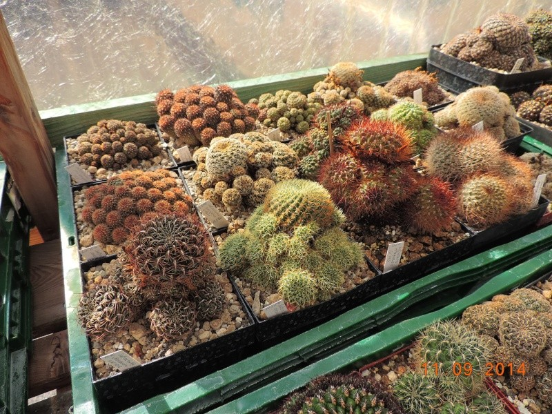 Cacti and Sukkulent in Köln, every day new flowers in the greenhouse Part 107 Bild1445