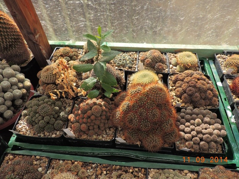Cacti and Sukkulent in Köln, every day new flowers in the greenhouse Part 107 Bild1446