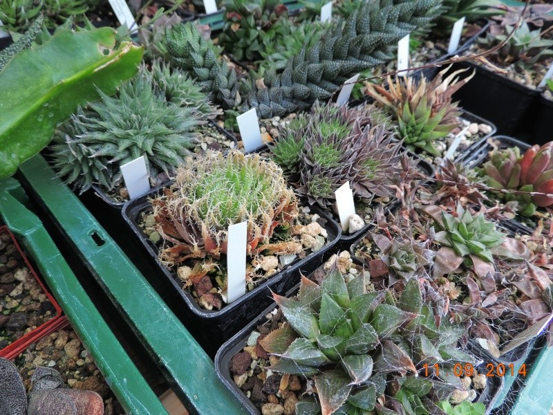 Cacti and Sukkulent in Köln, every day new flowers in the greenhouse Part 107 Bild1452
