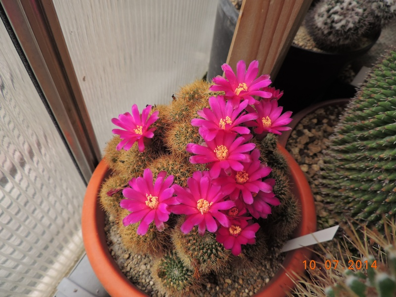 Cacti and Sukkulent in Köln, every day new flowers in the greenhouse Part 108 Bild1519