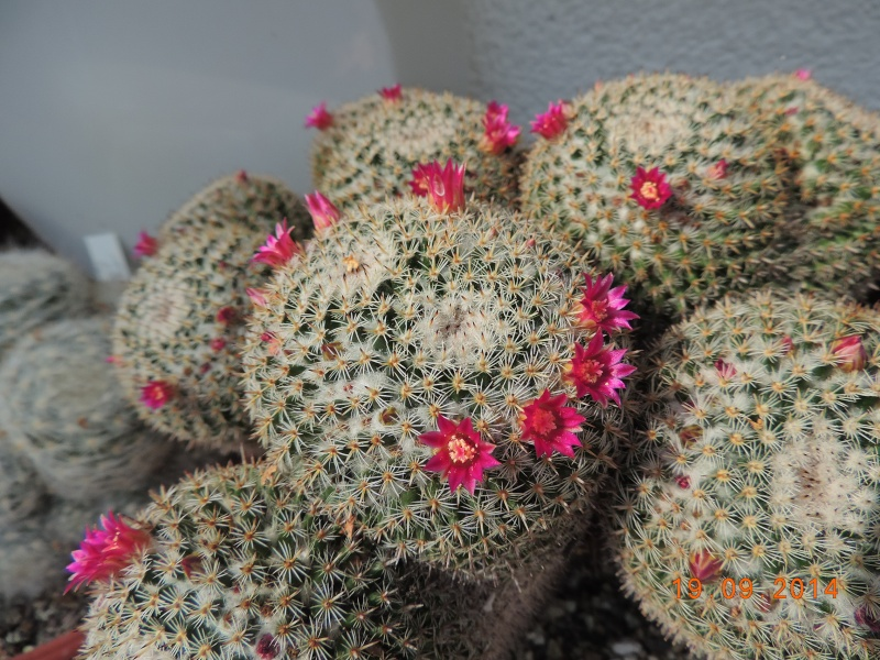 Cacti and Sukkulent in Köln, every day new flowers in the greenhouse Part 108 Bild1535