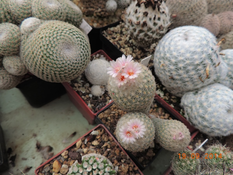 Cacti and Sukkulent in Köln, every day new flowers in the greenhouse Part 108 Bild1542