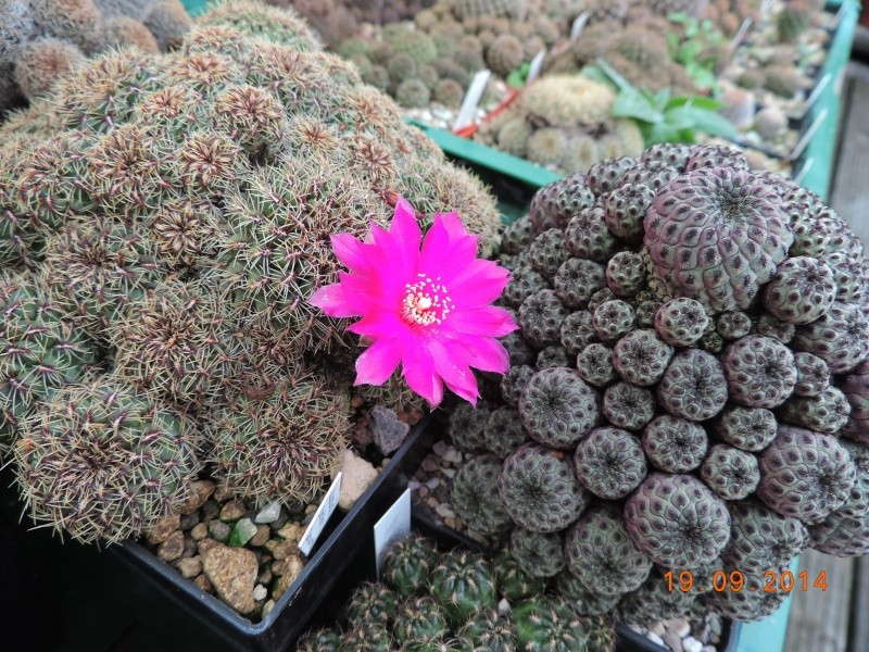 Cacti and Sukkulent in Köln, every day new flowers in the greenhouse Part 108 Bild1550
