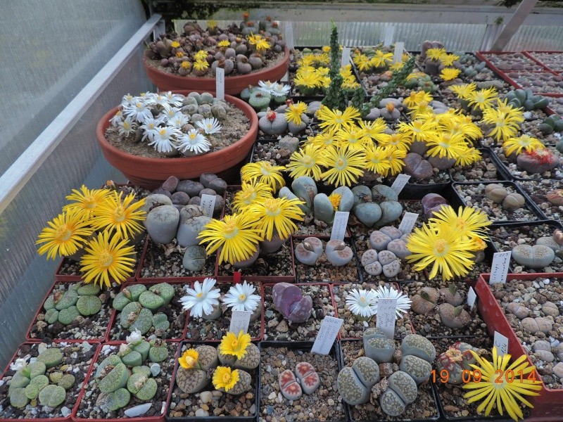 Cacti and Sukkulent in Köln, every day new flowers in the greenhouse Part 108 Bild1568