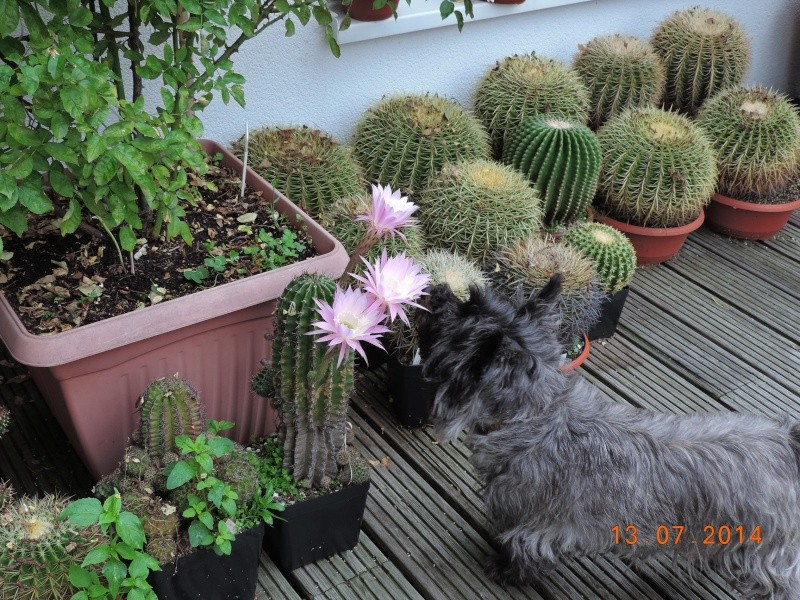 Cacti and Sukkulent in Köln, every day new flowers in the greenhouse Part 108 Bild1571