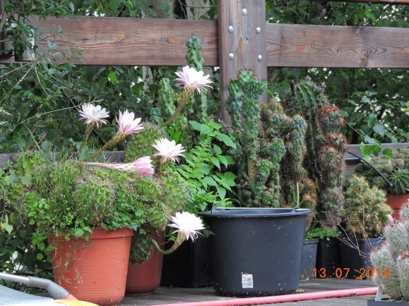 Cacti and Sukkulent in Köln, every day new flowers in the greenhouse Part 108 Bild1572