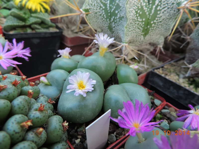 Cacti and Sukkulent in Köln, every day new flowers in the greenhouse Part 110 Bild1745