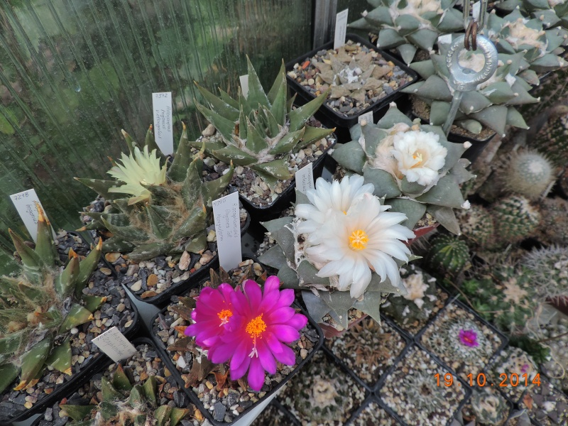 Cacti and Sukkulent in Köln, every day new flowers in the greenhouse Part 110 Bild1756