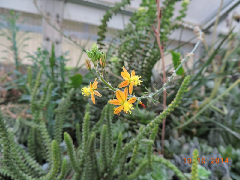 Cacti and Sukkulent in Köln, every day new flowers in the greenhouse Part 110 Bild1759