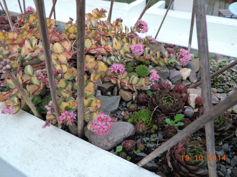 Cacti and Sukkulent in Köln, every day new flowers in the greenhouse Part 110 Bild1761