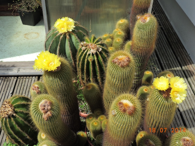 Cacti and Sukkulent in Köln, every day new flowers in the greenhouse Part 110 Bild1762