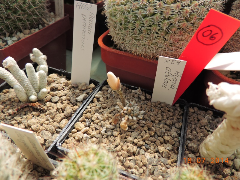 Cacti and Sukkulent in Köln, every day new flowers in the greenhouse Part 110 Bild1769