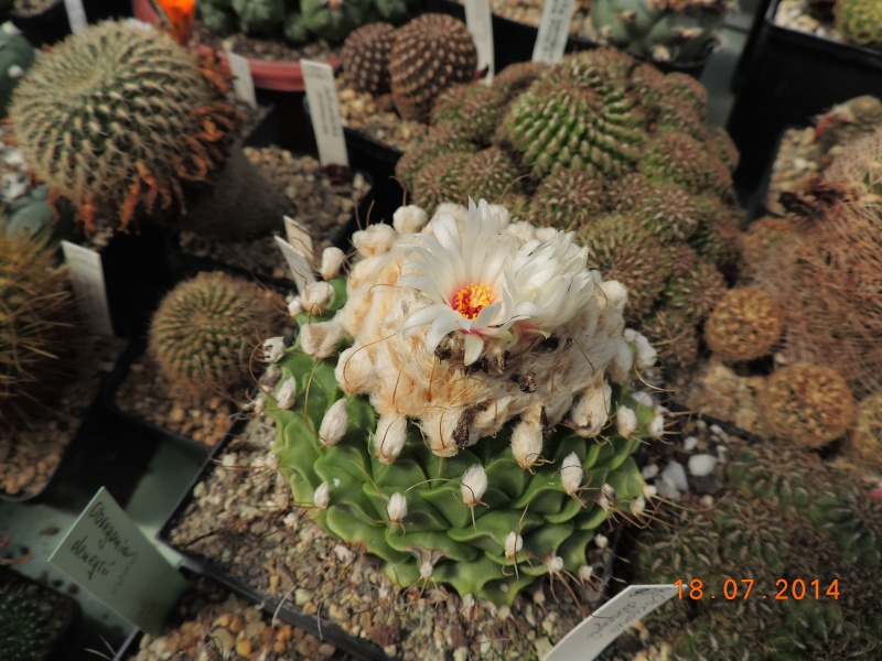 Cacti and Sukkulent in Köln, every day new flowers in the greenhouse Part 110 Bild1775