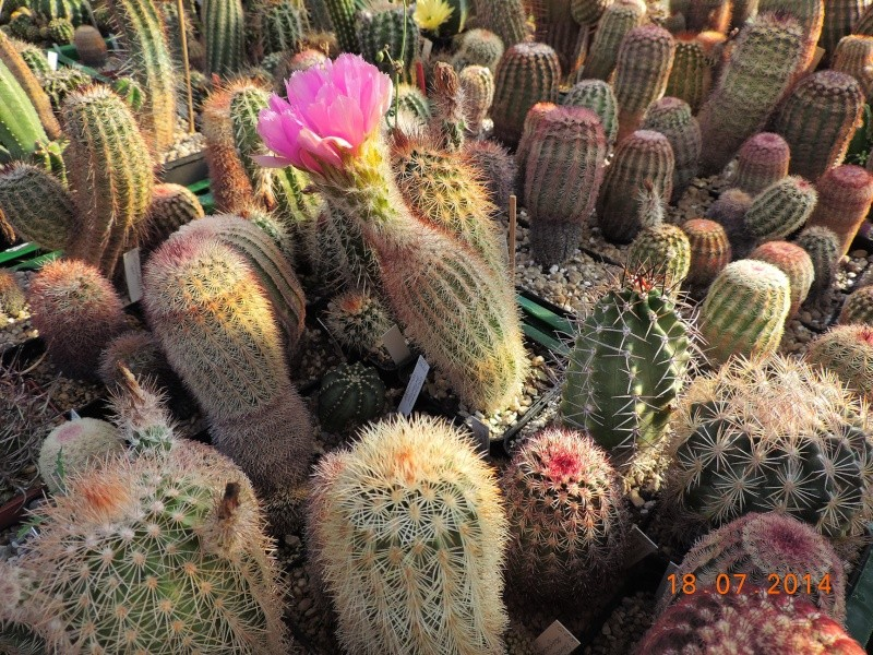 Cacti and Sukkulent in Köln, every day new flowers in the greenhouse Part 110 Bild1789
