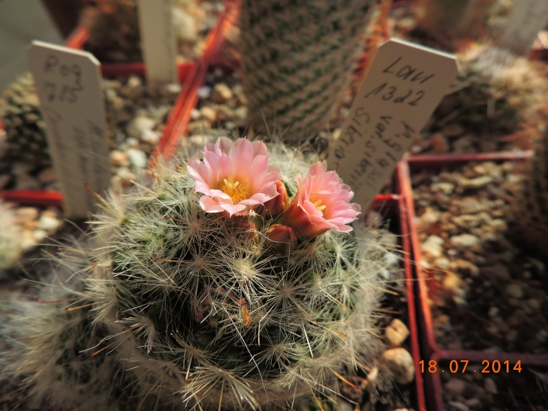 Cacti and Sukkulent in Köln, every day new flowers in the greenhouse Part 110 Bild1790