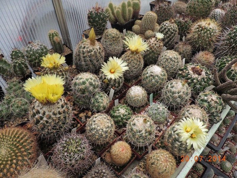 Cacti and Sukkulent in Köln, every day new flowers in the greenhouse Part 110 Bild1796
