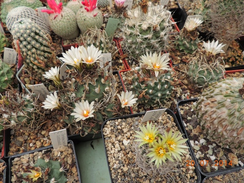 Cacti and Sukkulent in Köln, every day new flowers in the greenhouse Part 110 Bild1802