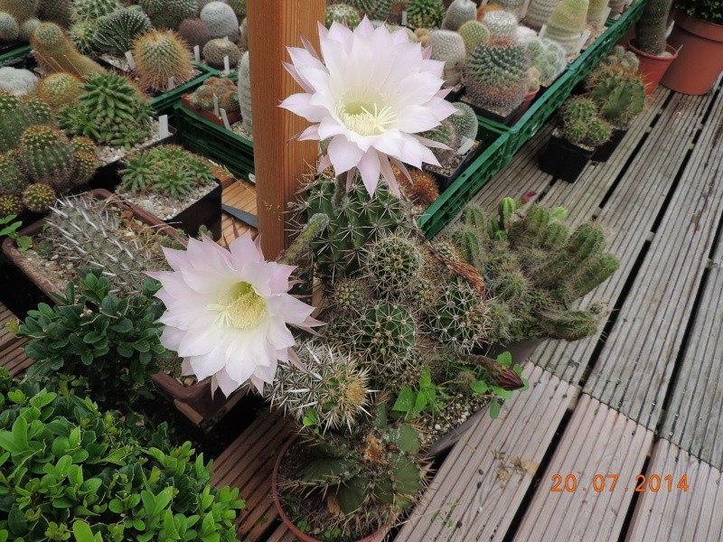 Cacti and Sukkulent in Köln, every day new flowers in the greenhouse Part 110 Bild1813