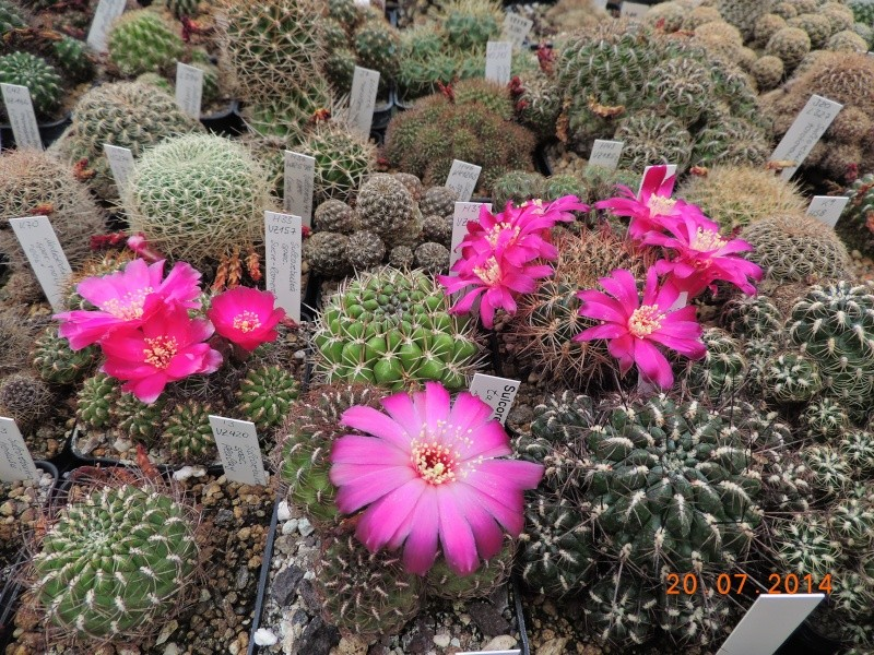 Cacti and Sukkulent in Köln, every day new flowers in the greenhouse Part 110 Bild1823