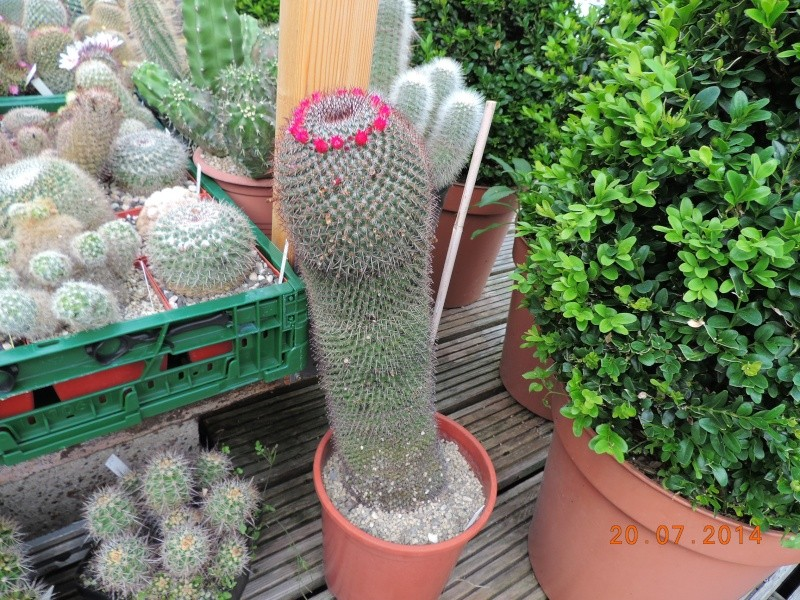 Cacti and Sukkulent in Köln, every day new flowers in the greenhouse Part 110 Bild1834