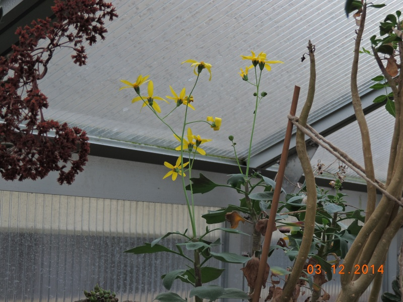 Cacti and Sukkulent in Köln, every day new flowers in the greenhouse Part 114 Bild1899