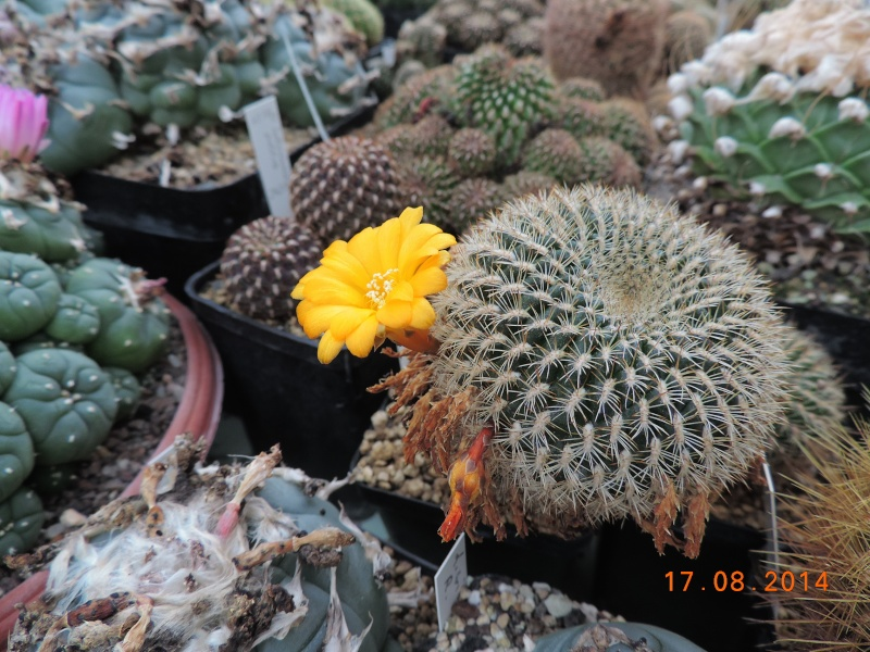 Cacti and Sukkulent in Köln, every day new flowers in the greenhouse Part 115 Bild1939