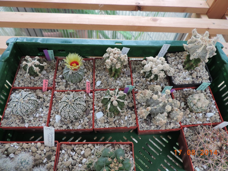 Cacti and Sukkulent in Köln, every day new flowers in the greenhouse Part 115 Bild1948