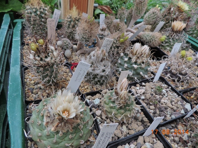 Cacti and Sukkulent in Köln, every day new flowers in the greenhouse Part 115 Bild1952
