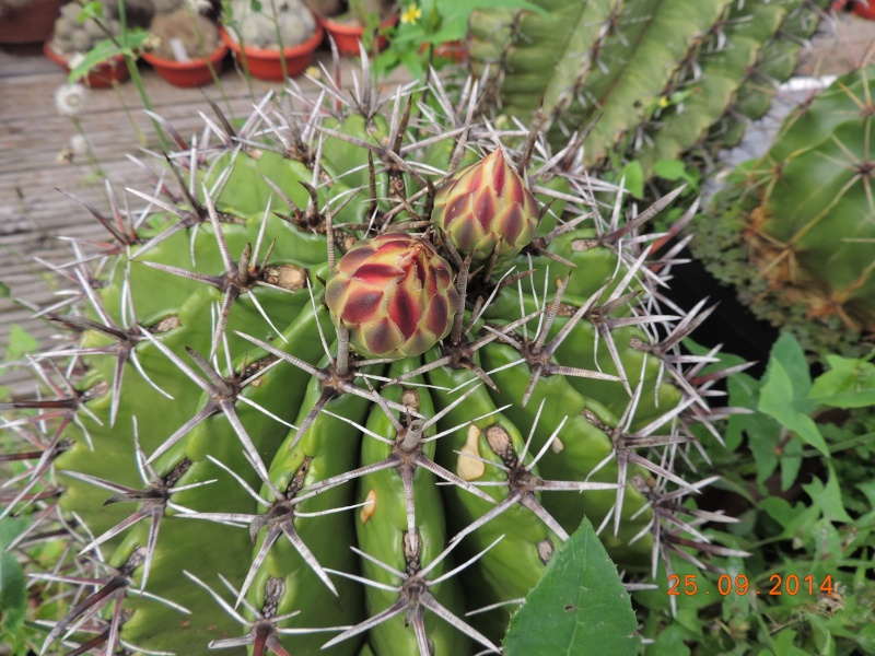 Cacti and Sukkulent in Köln, every day new flowers in the greenhouse Part 115 Bild1970