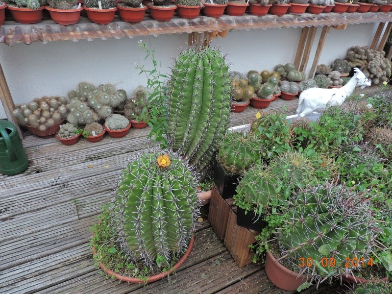 Cacti and Sukkulent in Köln, every day new flowers in the greenhouse Part 115 Bild1972
