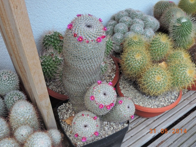 Cacti and Sukkulent in Köln, every day new flowers in the greenhouse Part 98 Bild_343