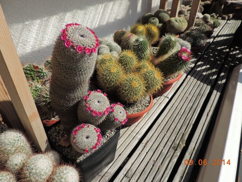 Cacti and Sukkulent in Köln, every day new flowers in the greenhouse Part 99 Bild_445