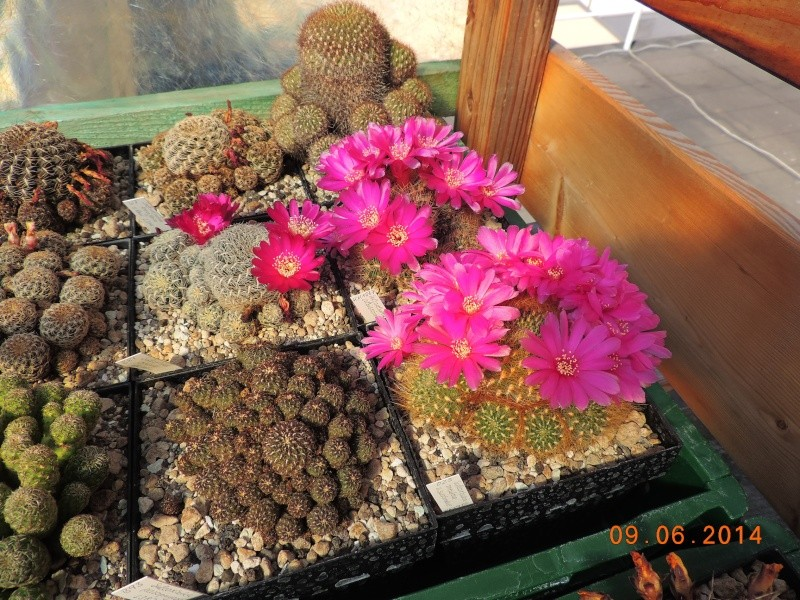 Cacti and Sukkulent in Köln, every day new flowers in the greenhouse Part 99 Bild_454