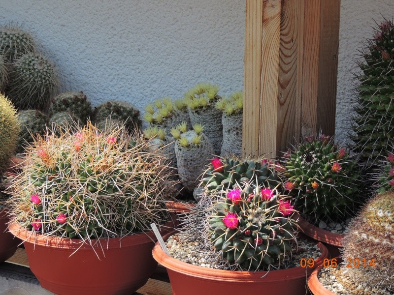 Cacti and Sukkulent in Köln, every day new flowers in the greenhouse Part 99 Bild_515