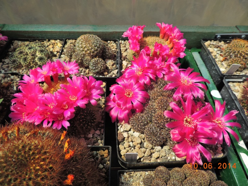 Cacti and Sukkulent in Köln, every day new flowers in the greenhouse Part 99 Bild_555