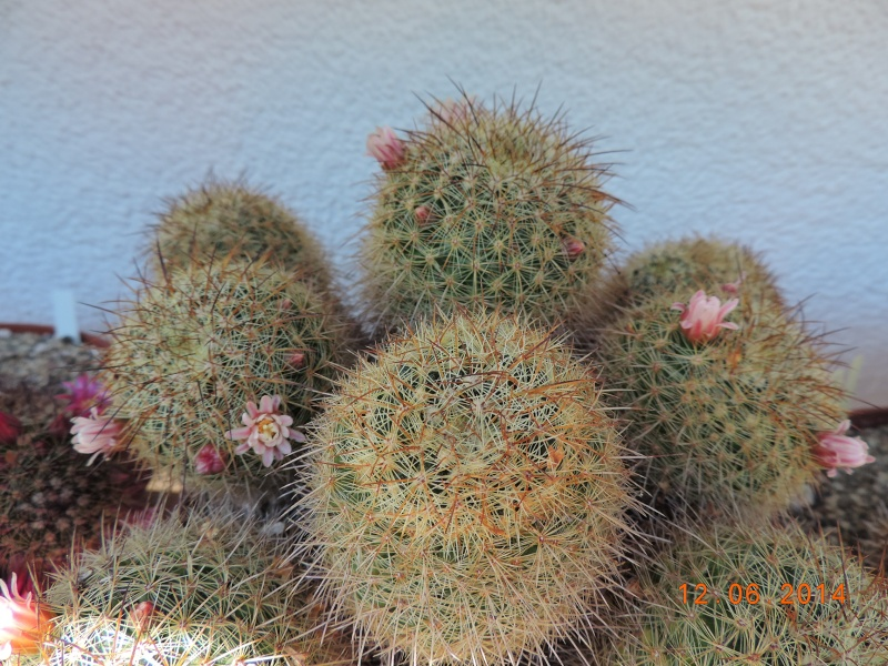Cacti and Sukkulent in Köln, every day new flowers in the greenhouse Part 100 Bild_568