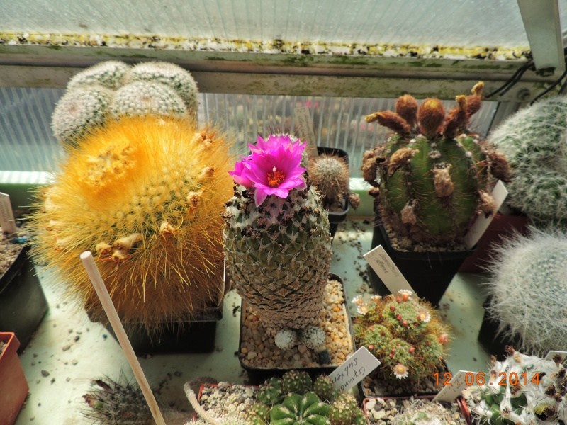 Cacti and Sukkulent in Köln, every day new flowers in the greenhouse Part 100 Bild_574