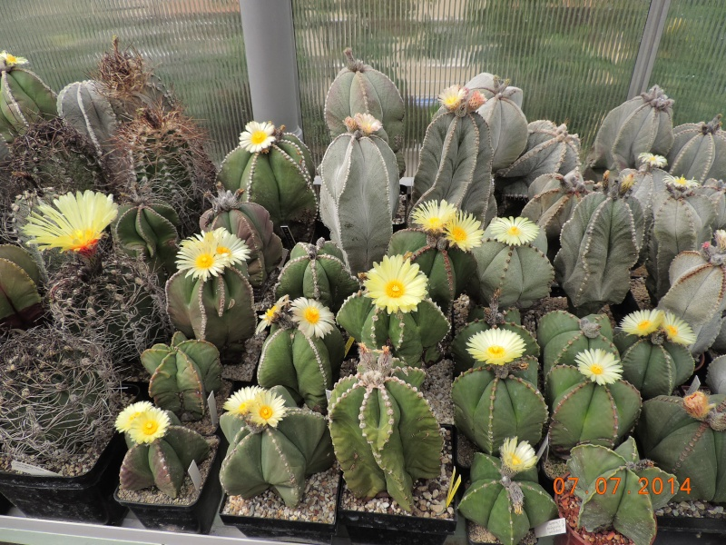 Cacti and Sukkulent in Köln, every day new flowers in the greenhouse Part 100 Bild_588