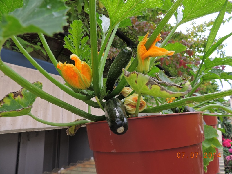 Cacti and Sukkulent in Köln, every day new flowers in the greenhouse Part 100 Bild_590