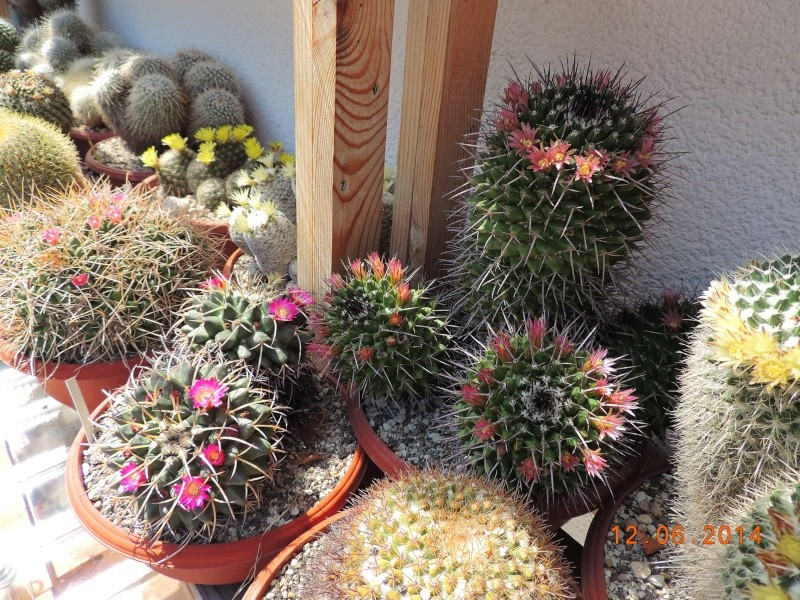 Cacti and Sukkulent in Köln, every day new flowers in the greenhouse Part 100 Bild_596