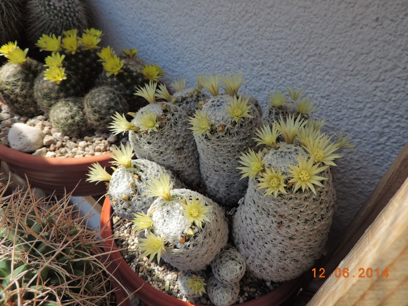 Cacti and Sukkulent in Köln, every day new flowers in the greenhouse Part 100 Bild_597