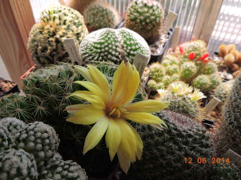 Cacti and Sukkulent in Köln, every day new flowers in the greenhouse Part 100 Bild_605