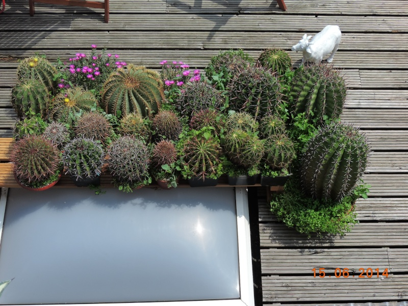 Cacti and Sukkulent in Köln, every day new flowers in the greenhouse Part 100 Bild_637