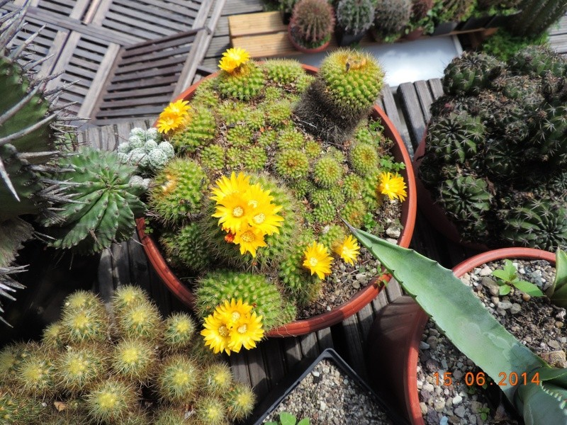 Cacti and Sukkulent in Köln, every day new flowers in the greenhouse Part 100 Bild_638