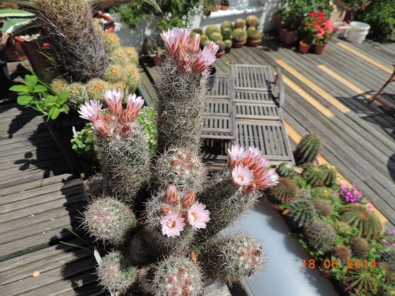 Cacti and Sukkulent in Köln, every day new flowers in the greenhouse Part 101 Bild_669