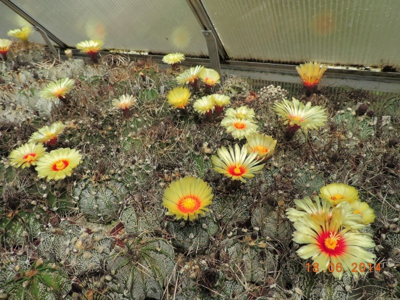 Cacti and Sukkulent in Köln, every day new flowers in the greenhouse Part 101 Bild_676